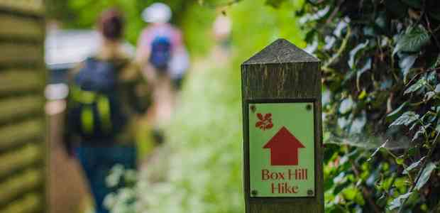 Box Hill hike in Surrey